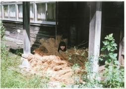 Makoto Okunaka My 17 years old113