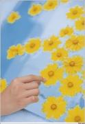 Honoka Ayukawa gravure swimsuit image summer clothes038