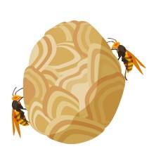 スズメバチ駆除←年収2000万です。 誰もやらない理由wwwwww